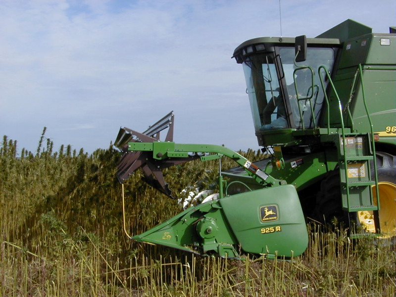 Industrial Hemp Production: Cutting the Stalks