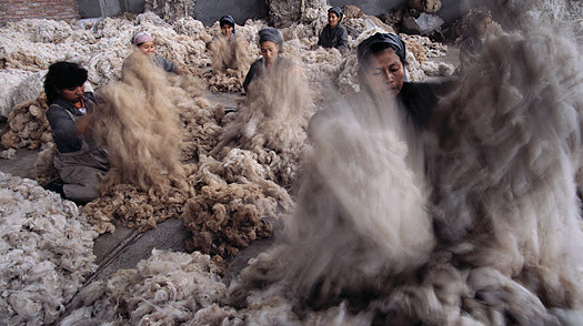 Wool Being Sorted in Lima - What Is Alpaca