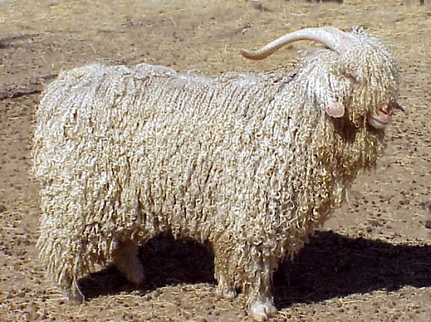 What Is Mohair?